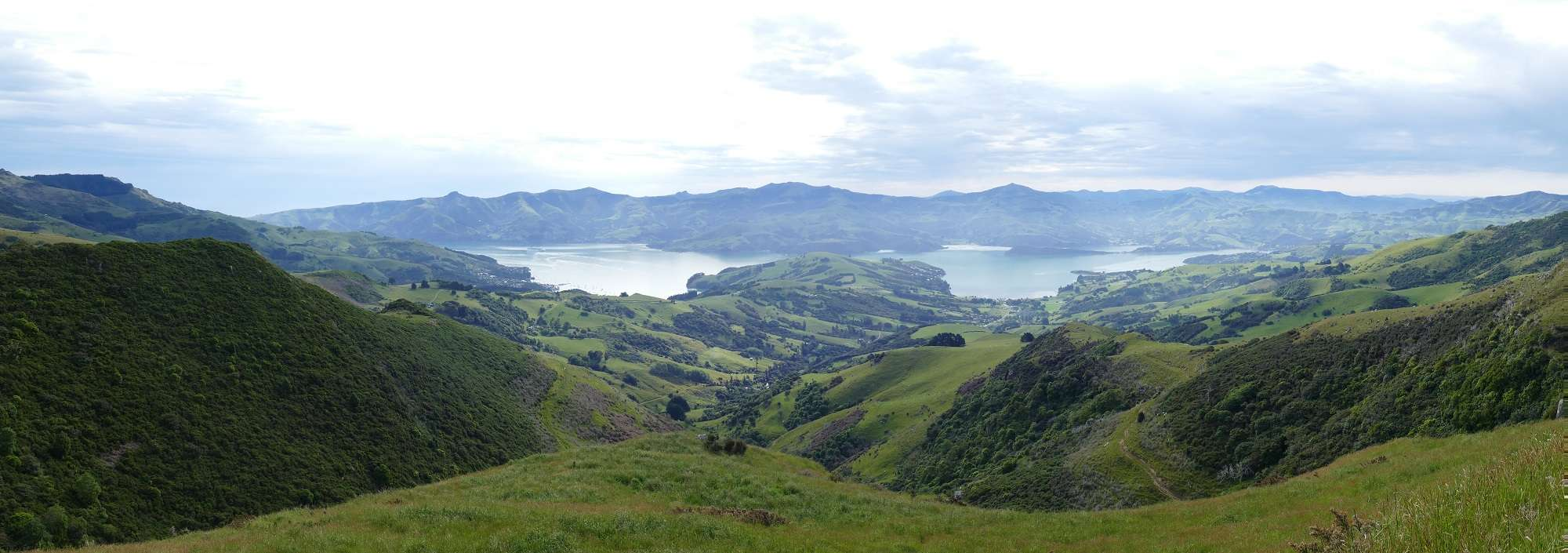 List of Banks Peninsula Endemics