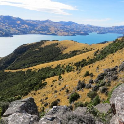 The Seventh Generation_Tours_Akaroa_Banks Peninsula_Marie Haley (61)