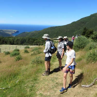 The Seventh Generation_Tours_Akaroa_Banks Peninsula_Marie Haley (69)